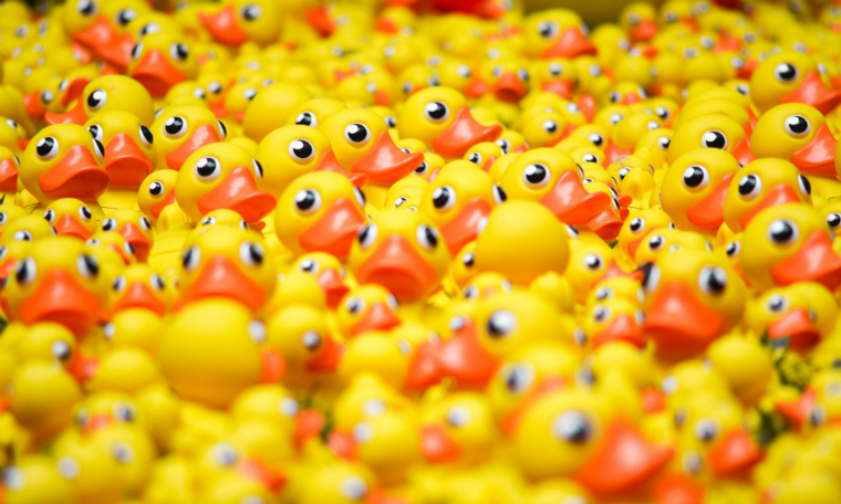 Photograhie de canards en plastique